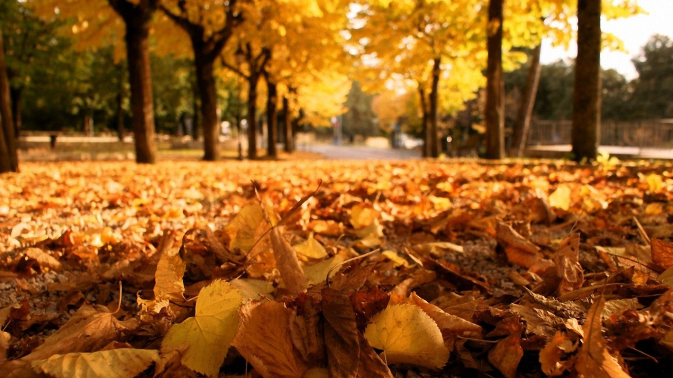 Autumn Leaves Girl Hd Wallpaper Wallpapers Engine