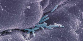 Vedanta Immunomodulator